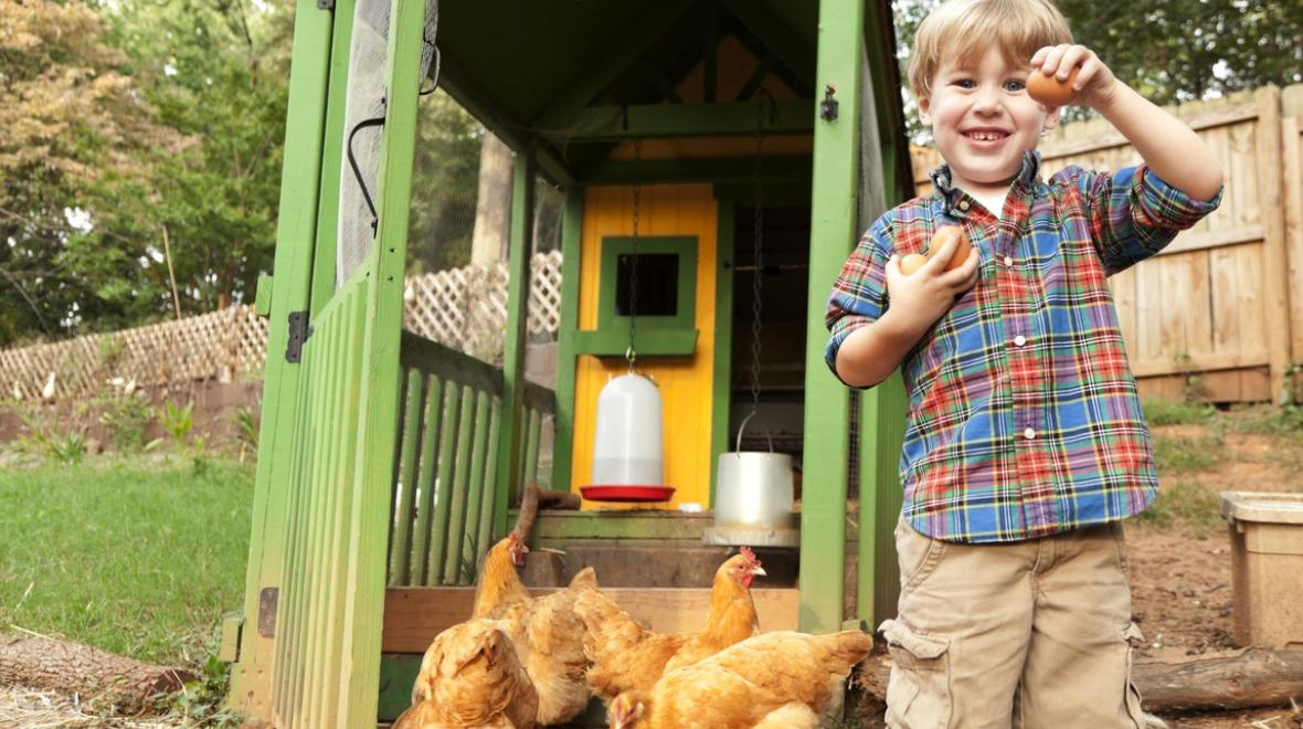 boy with hens and egg in front of chicken coop in yard