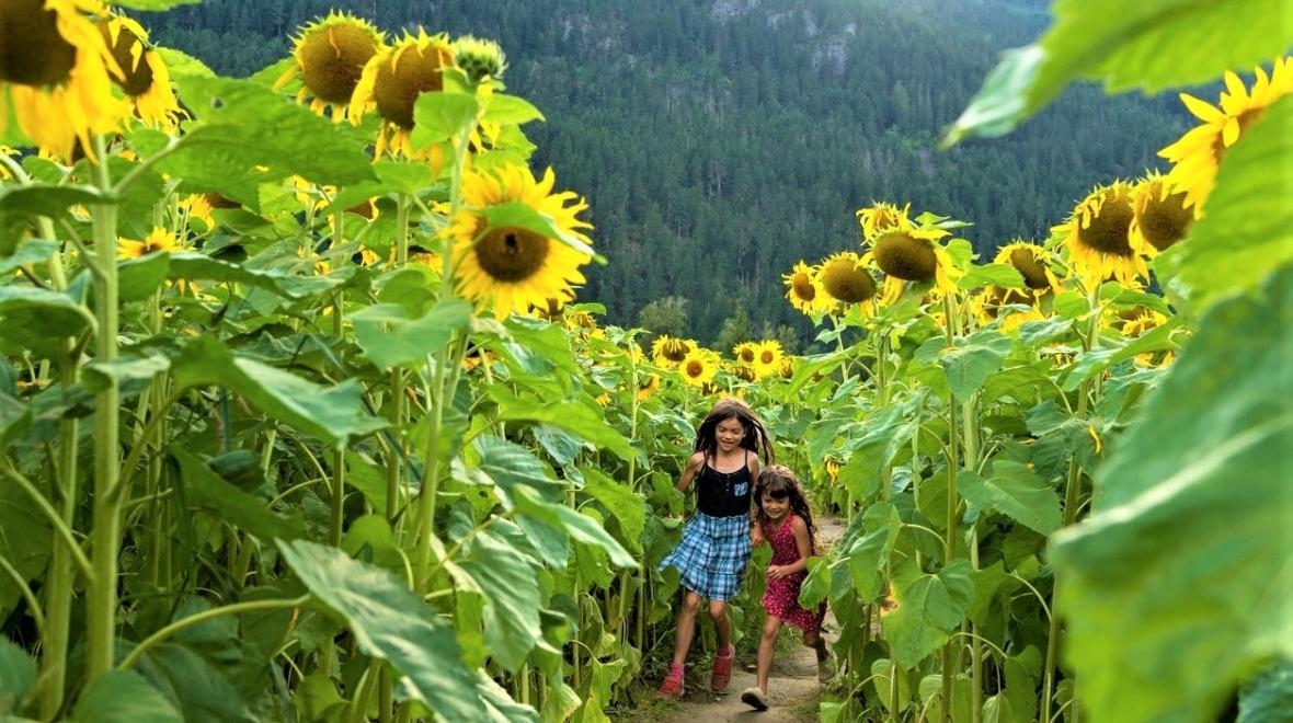 Sunflower Festivals for Seattle-Area Families | ParentMap
