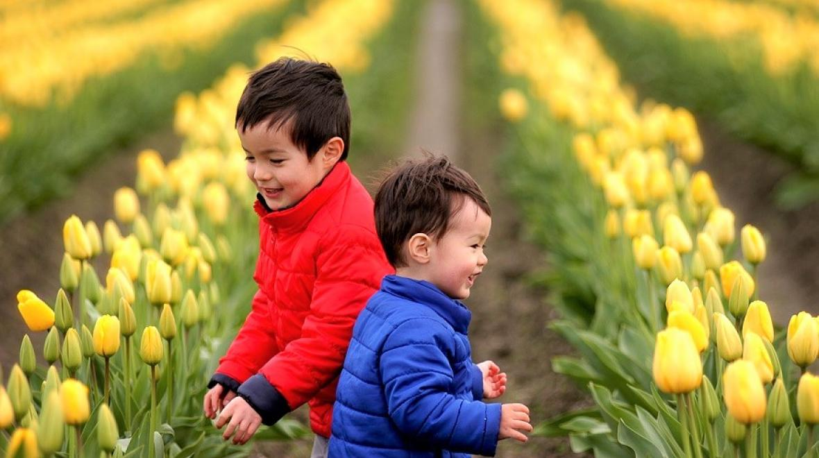 Two young brothers in winter jackets play in front of long rows of yellow tulips at the Skagit Valley Tulip Festival in 2017