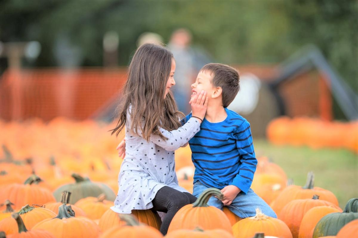 Best Pumpkin Patches and Corn Mazes for Seattle and Eastside ...