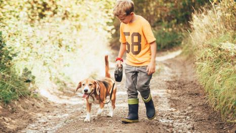 Boy in rain boots and yellow t-shirt, about age 7 or 8, walking beagle on leash along muddy dirt road in early spring