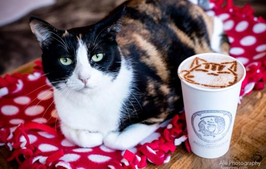 Cat with coffee at Seattle Meowtropolitan