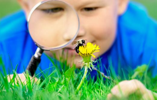 Boy looking at bee on flower