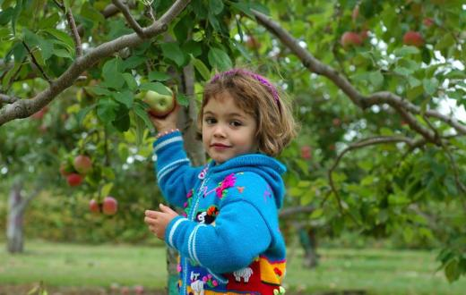 Girl picking an apple