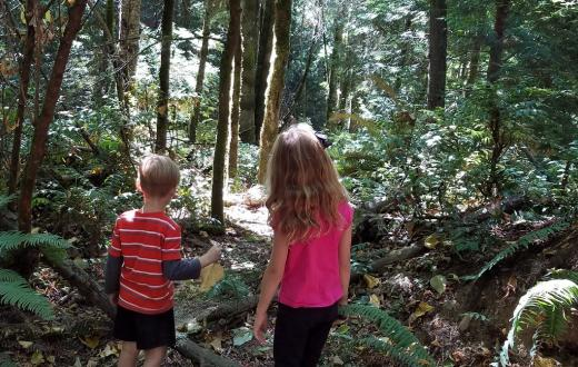 Kids hiking at Llandover Woods