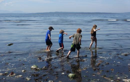 Free and cheap summer fun around Seattle kids exploring low tide