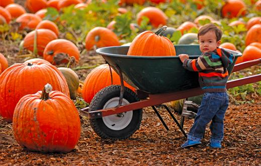 Young child with pumpkin