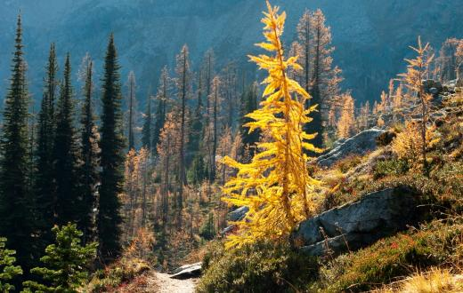 Best-fall-hikes-families-kids-autumn-colors-seattle-bellevue-everett-eastside