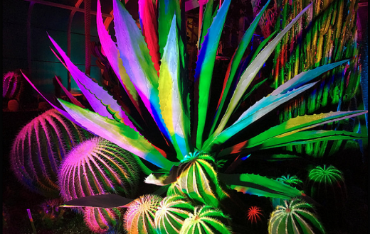Light-Plantasia-Tacoma-Lusio-light-show-families-kids-seymour-conservatory-december-2019
