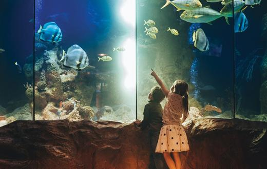 kids at an aquarium pointing at fish