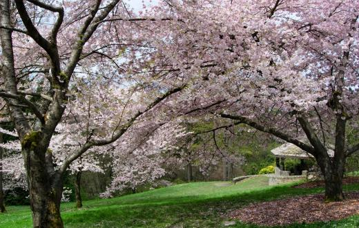 spring-blooms-seattle-families-kids-paths-to-walk-washington-park