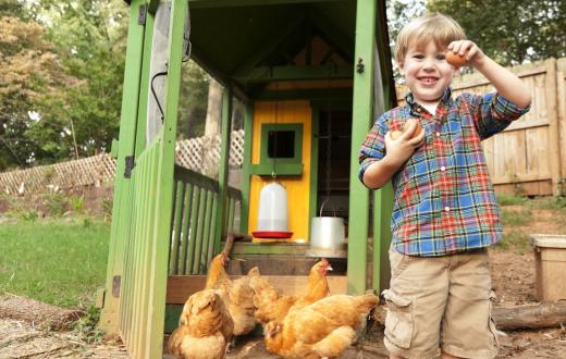Boy with chickens, egg and chicken coop in backyard smiling and showing egg