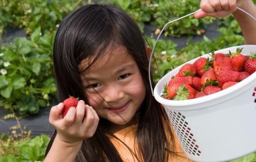 best-u-pick-berry-farms-kids-families-seattle-bellevue-everett-tacoma