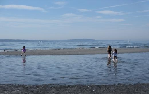 exploring low tide at carkeek park seattle best weekend events for families tacoma bellevue eastside kids