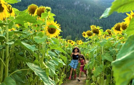 girls running through field of sunflowers seattle area sunflower festivals for families