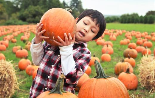 boy in pumpkin patch lifting large pumpkin best pumpkin patches kids families seattle bellevue eastside king county