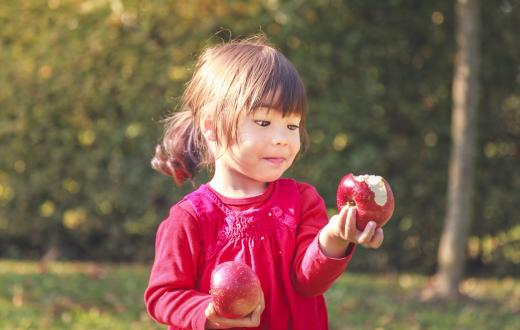 Small girl holding apples looking at one with bite in it apple and cider events Seattle kids families