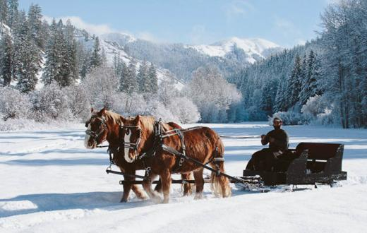 horse sleigh in the snow at eagle creek