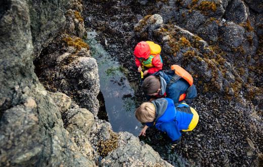 three bundled-up children peering into a tide pool in the pacific northwest