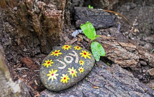 "Rock painted with yellow flowers and the word ""joy"" sitting near the base of a tree presumably hidden for a painted rock search to find"