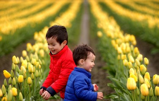 Two young brothers in winter jackets play in front of long rows of yello tulips at the Skagit Valley Tulip Festival in 2017