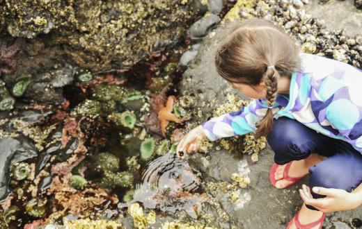 Young girl with braids and wearing flip flops peers into a Puget Sound tide pool with sea stars and anemones visible best weekend events Seattle kids families