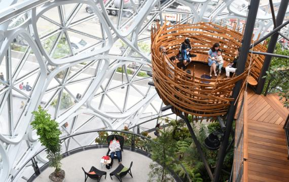 Bird's nest inside the Amazon Spheres credit JiaYing Grygiel