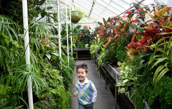 volunteer park conservatory kid in fern room