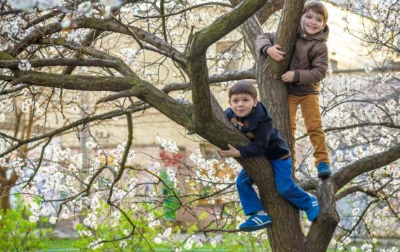 Two brothers climbing a tree in their backyard