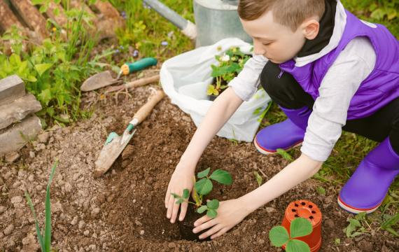 Boy in purple vest and boots in garden planting a seedling for Earth Day
